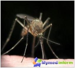 inseto, mosquito, o tratamento da malária, mosquito da malária, malária, inseto, sintomas de malária