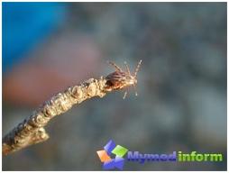 Prevention of tick-borne encephalitis and Lyme disease