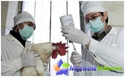 Θεραπεία και πρόληψη της γρίπης, της γρίπης των πτηνών