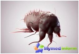la maladie, les acariens, les parasites de la peau, la gale
