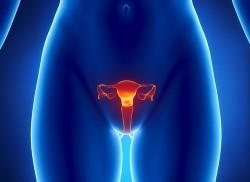 гинекологија, гинеколошка обољења, материца, фиброиди, фиброиди