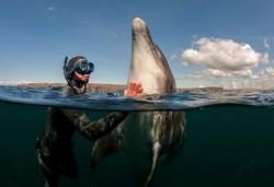 δελφίνι, δελφίνια, θεραπεία, θεραπεία