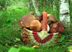 mushroom poisoning, mushroom poisoning, first aid