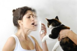 allergy, allergic to cats, allergist, immunology, cats
