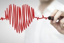 artère, Vienne, système cardio-vasculaire, les vaisseaux sanguins, les vaisseaux sanguins renforcent