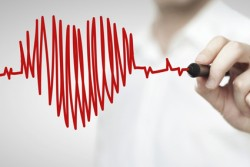 artery, Vienna, cardiovascular system, blood vessels, blood vessels strengthen