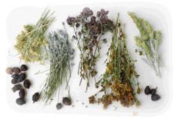terapia ziołowa, medycyna ludowa, zioła, ziołolecznictwo