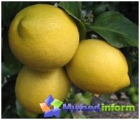 Lorsque le citron vient à la rescousse