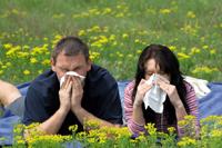 Alergia Nakłuć swoje smutki