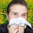 10 hay fever allergy rules