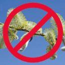 Apriltesene allergi