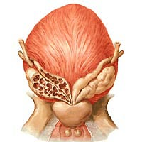 briefly about vesiculitis