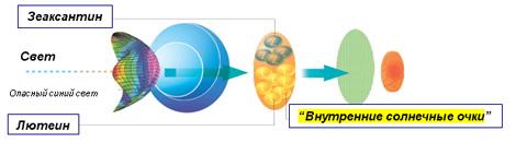 Okuvayt® lutéine - protection de la santé visuelle pour les années à venir!