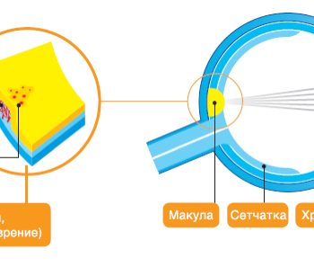 јачање природног имунитета очи
