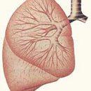 Ce este abces pulmonar cronic