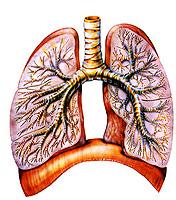 Leczenie zapalenia płuc