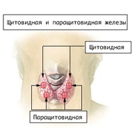 Los principales síntomas de hipoparatiroidismo