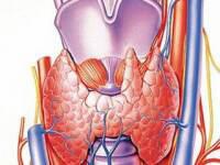 Os principais sintomas e métodos de diagnóstico de cancro da tiróide