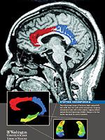 Biologisk behandling av schizofreni