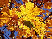 ¿Cómo hacer frente a la depresión de otoño