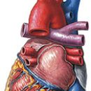 angina, risk factors and treatment