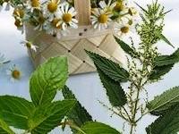 العلاج بالنباتات في عضلة القلب