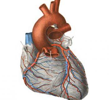 l'ischémie cardiaque