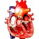 ¿Cómo está el corazón