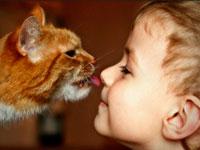 Animaloterapiya - behandling af dyr