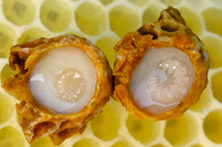 a miracle cure for royal jelly