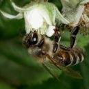 apitherapy and bee products