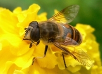the healing properties of bee products