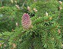 од онога што чини дрво