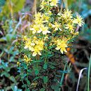 St. John's wort against depression
