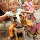 Прос собакотерапии