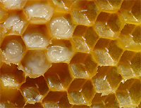 It is useful royal jelly