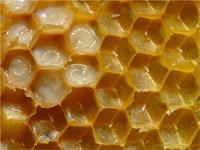 Mleczko pszczele, aby pomóc młodej matce