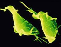 Symptome und Behandlung von Trichomoniasis