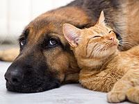 Was bekommen Sie von einem Haustier