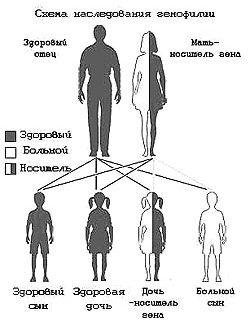 assort heredity