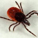what we know about ticks