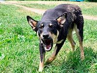 Meios de defesa de cães, o que é?