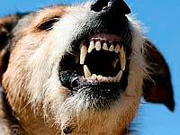 As regras básicas para a proteção de ataques de cães