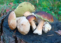 mushroom poisoning first signs and first aid