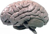 regulação da circulação do sangue no cérebro e suas desordens