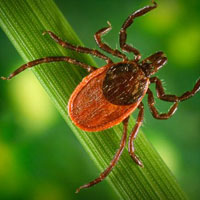 mites attack