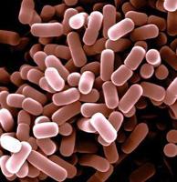 Listeriose symptomen en behandeling