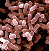 Listeriosis: symptoms and treatment