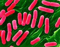 Symptomer og behandling af listeriose
