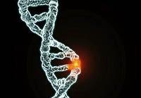 Terapia genowa głuchoty. Poszukiwania